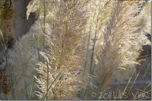 fall grass wm