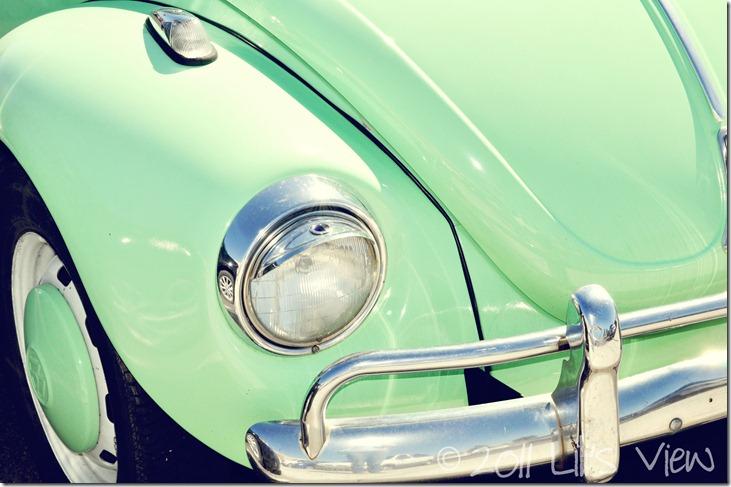 green bug_edited-1
