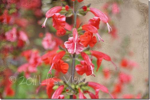 textured flowers wm