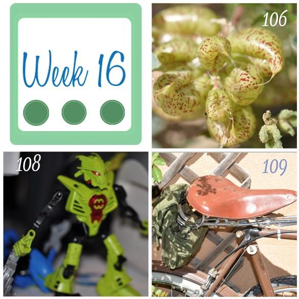 week-16.jpg