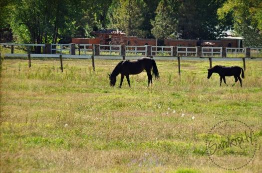 horseswm