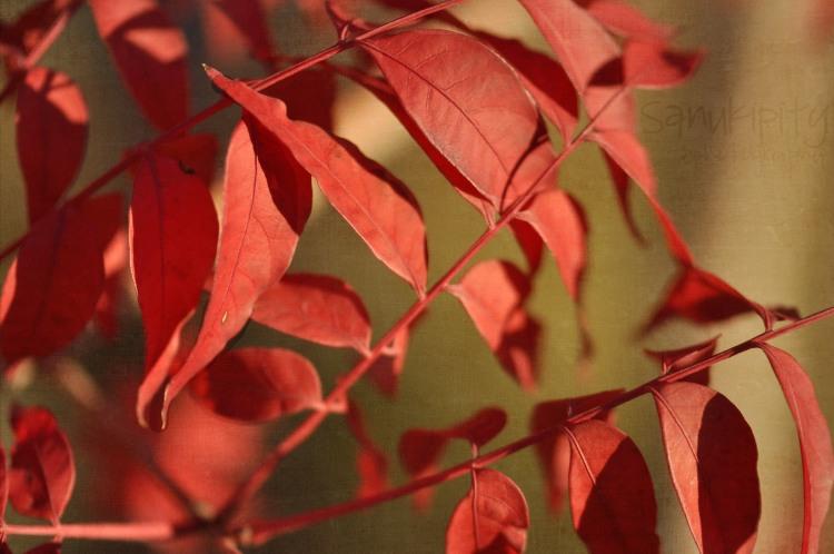 leafy wm