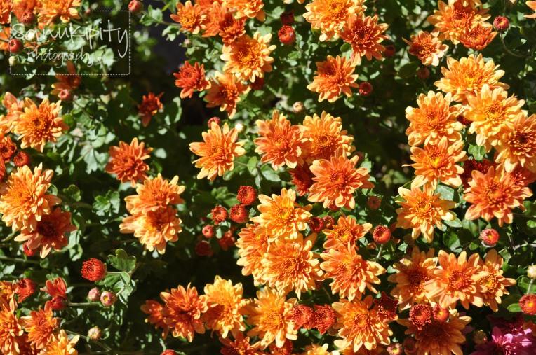 orange wm