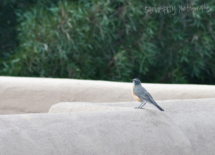 bird watching3