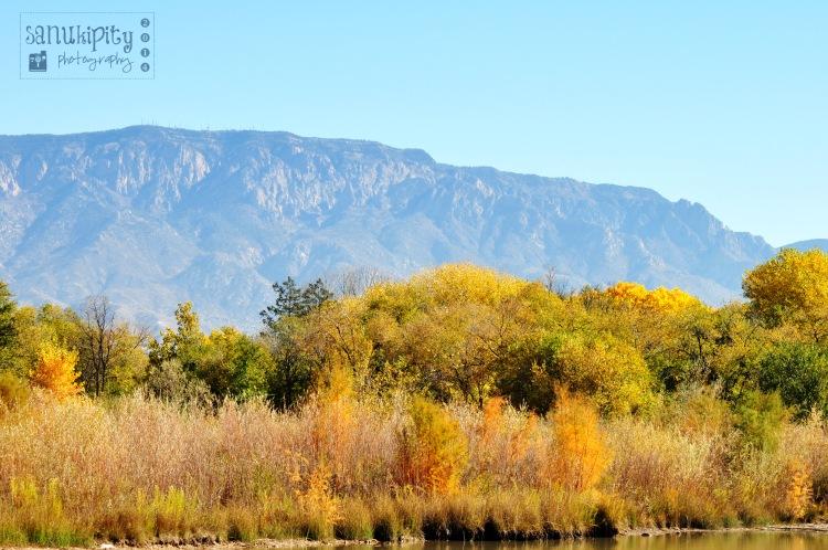 autumn, colors, trees